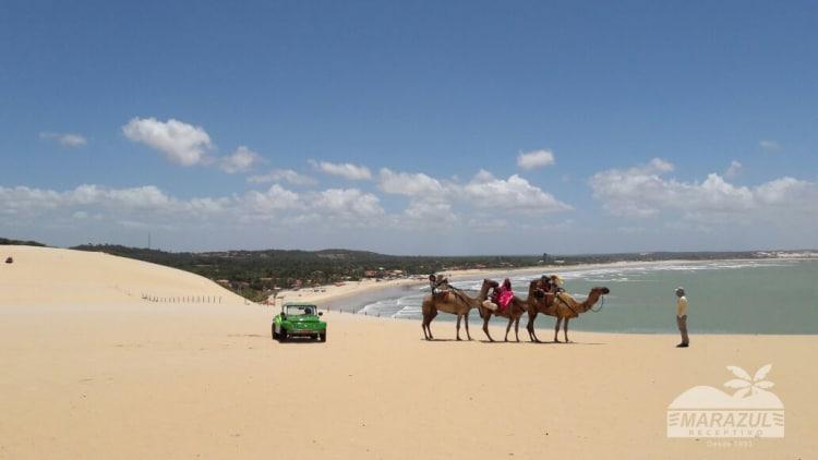 Buggy nas dunas de Genipabu ao lado dos dromedarios
